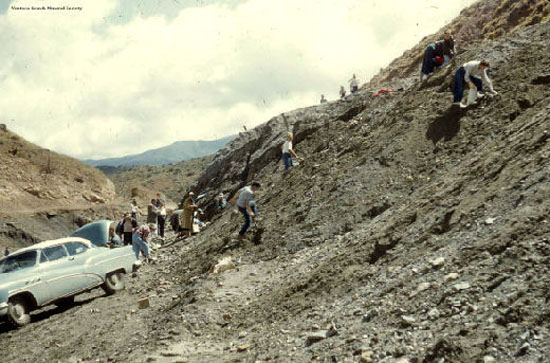 Mineral Club collecting at Tick Canyon in 1957