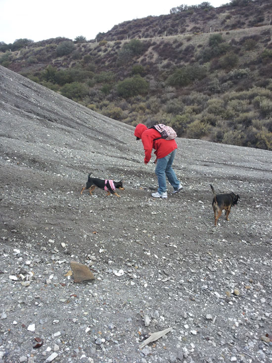 Brandy Zzyzx collecting Howlite in Tick Canyon