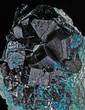 Spangolite with cuprite: Czar Mine, Bisbee, Arizona: crystals to 1.7 cm (photo & specimen © Harvard University)