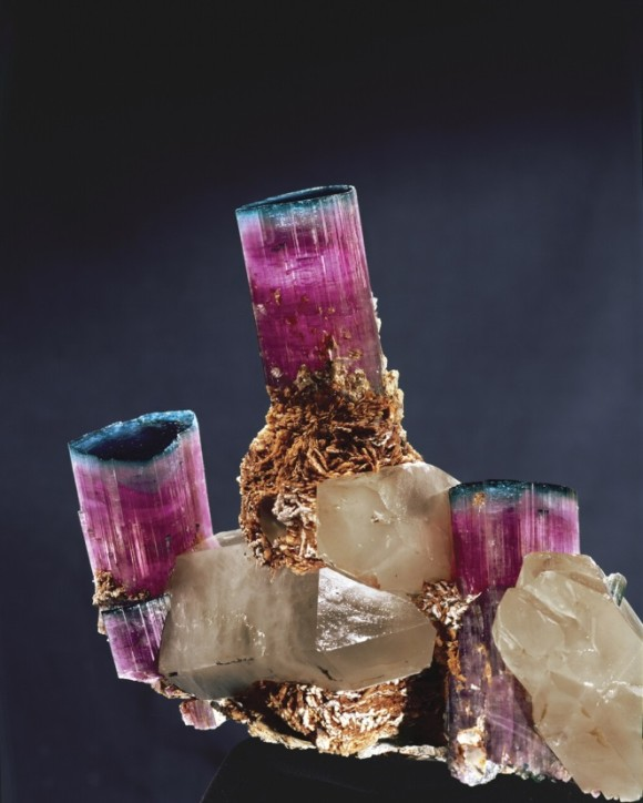 Famous 25 cm-wide 'cadelabra' blue-capped Elbaite Tourmaline from the 1972 Tourmaline Queen Mine find (photo © Harold & Erika Van Pelt)