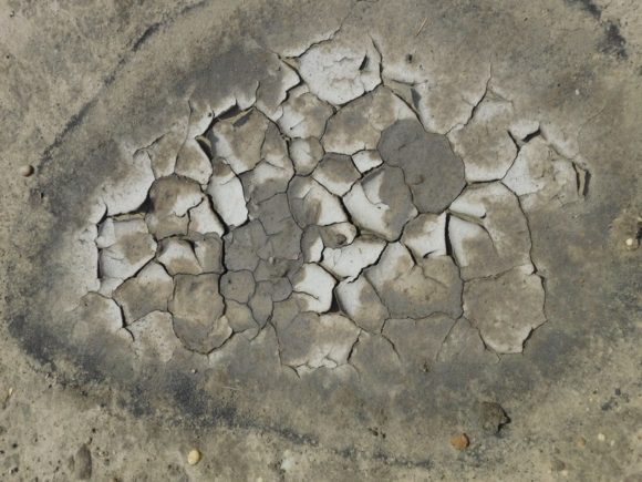 This locality is known for its aesthetic cracked mud.