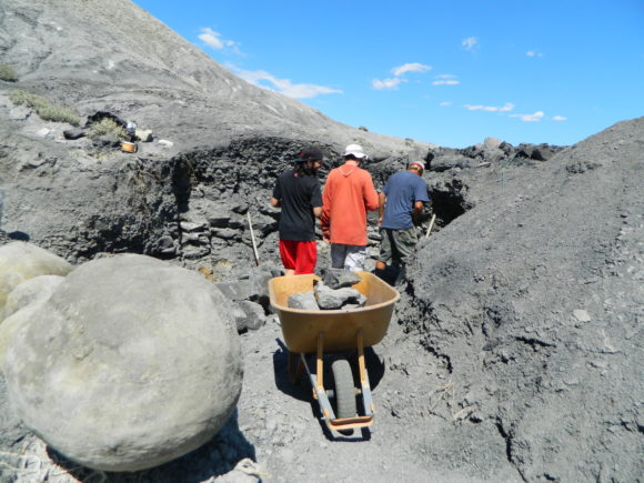 Digging into the ground in order to reveal these large concreations in the Utah shale.
